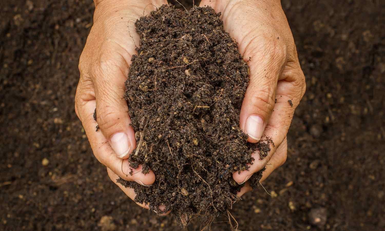 39 we urgently need healthy soils to ensure essential for What are soils