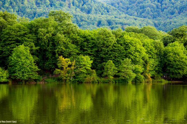 Beautiful and thick forest in Mazandaran province, northern Iran Photo by: Mohammad Reza Domiri