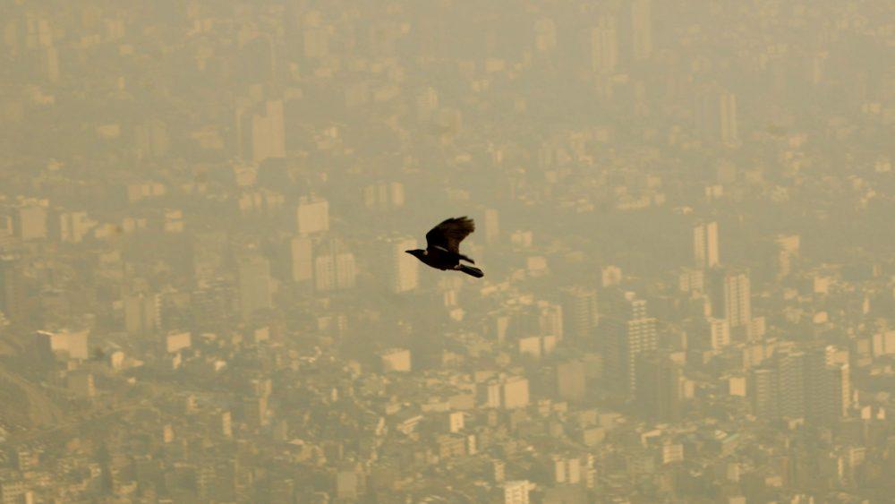 A bird flies through the polluted sky of Tehran January 25, 2007. REUTERS/Morteza Nikoubazl (IRAN) - RTR1LLY7